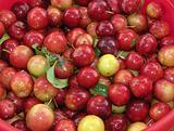 Pail cherry