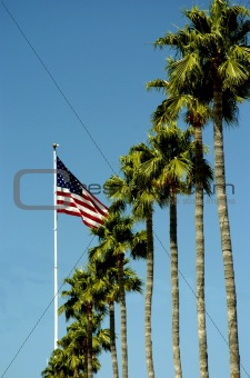Flag with Palms