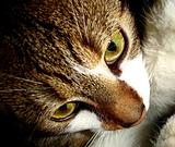 a cat closeup