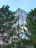Verticle Glass Office Building through the trees