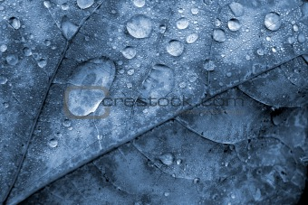 Blue Leaf with Water Droplets