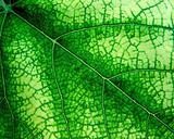 Texture Leaf