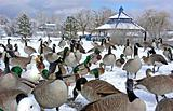 Duck Winter Picnic