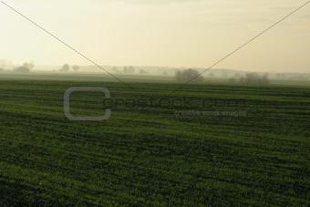 autumns field