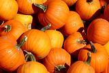 Close up on a Mini Pumpkins