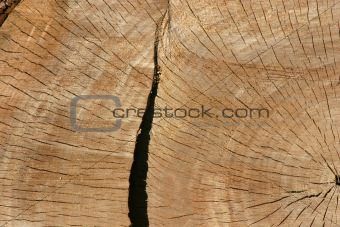 Close up on a Tree Trunk
