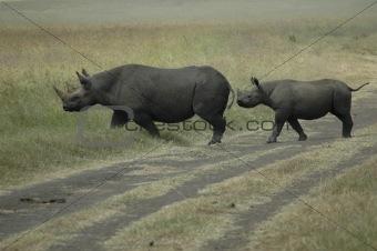 Black Rhino with baby