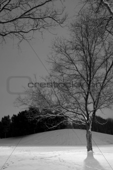 B&W - Vertical Shot of Light Post behind the Tree, Winter Scene