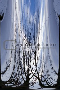 Abstract Waterfall to Branches