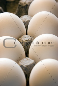 Close up on Eggs in a Carton