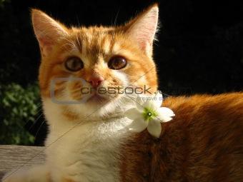 cat'n'flower