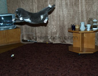 Cat acrobat