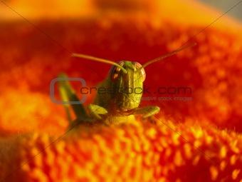 Green Grasshopper 1