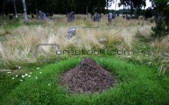 Anthill on Viking graveyard