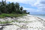 2004122903 Isla Soana