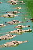 Sunbathing Crocodiles
