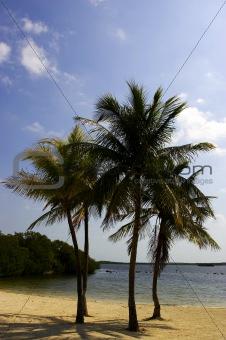 Four palm trees on a beach