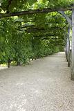 Pathway through grapevine covered pergola
