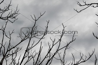 branches on grey