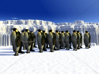 Penguins 6