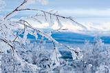 Snowy twigs. Frozen mountains and blue sky on background