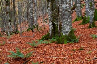 fall colors in autumn season