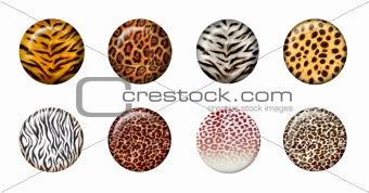3d wild buttons