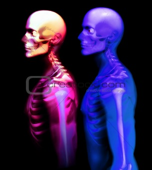 Man Bone 28