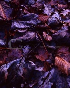 forest floor series *1