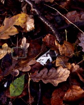 forest floor series *4