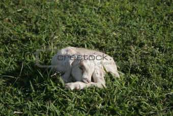 Sleeping newborn kid