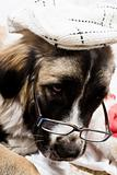 dog with spectacle