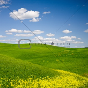 Flowered Landscape