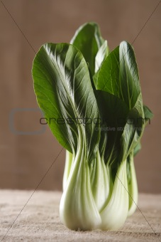 chinese cabbage bok choy pak-choi on rustic brown background