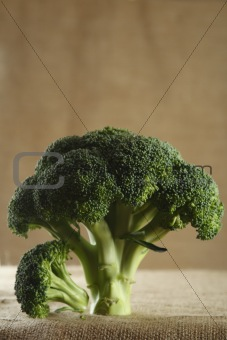 green fresh broccoli on brown rustic background
