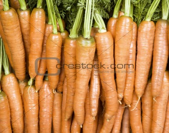 Bright Orange Carrots