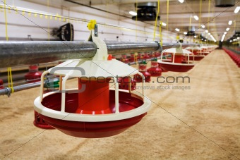 automated poultry farm