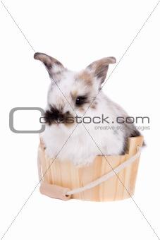 Bathing bunny