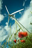 Wind Turbine in a Poppy Field