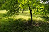 summertime garden
