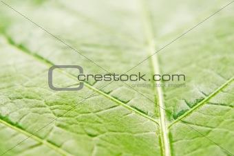 green life veins