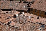roof tops of castellina in chianti