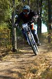 Downhill in forest