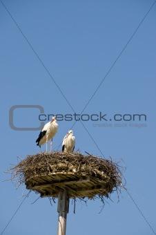 2 storks in nest