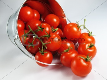 Tomatoes in a Bucket