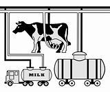 Manufacture of milk