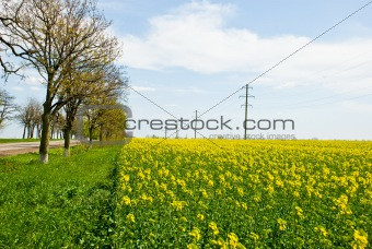 bright yellow field with trees