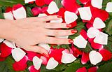 Hand And Petals