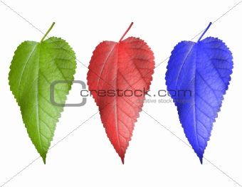 Three multi-coloured leaf