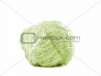 Green cabbage vegetable